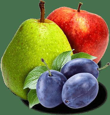 Pear, Apple & Plum