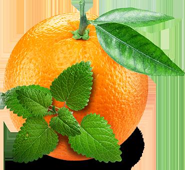 Mint, Lemon Balm & Orange